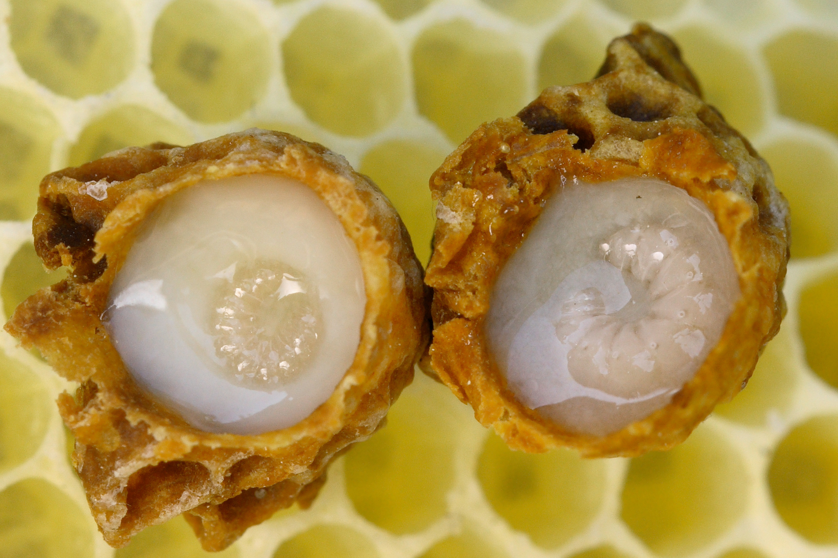 What Is royal jelly